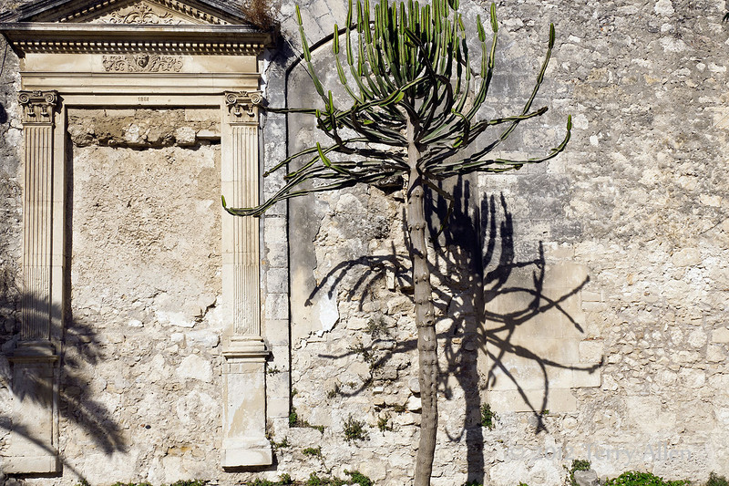 Euphorbia-tree-&-walled-up-doors,-Chiesa-di-San-Giovanni,-Syracuse,-Sicily