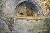 Catacombe-di-San-Giovanni-(early-Christian-symbols),-Siracuse,-Sicily