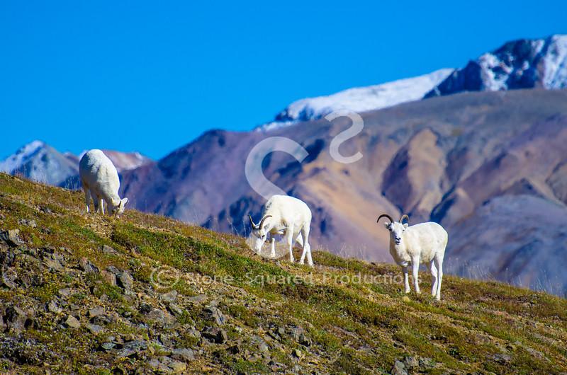Alpine Views