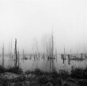 Bird Sanctuary, Winter Mist, Wolcott, NY. February 2000