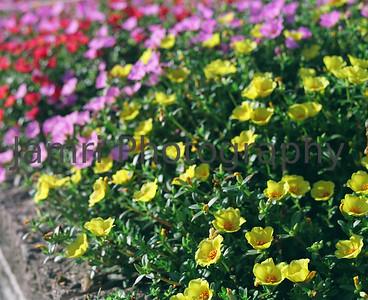 Mamiya RB67 Sample Photos