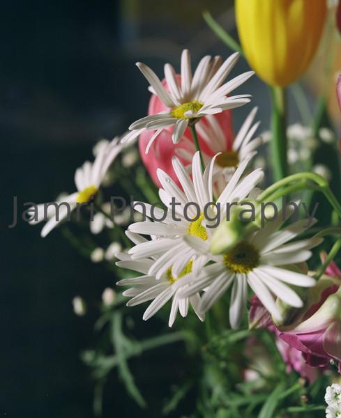"""Flowers""<br /> Mamiya RB67 - 90mm f/3.8 Lens - Kodak Portra 400VC"