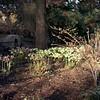 Bellevue Botanical - Medium Format