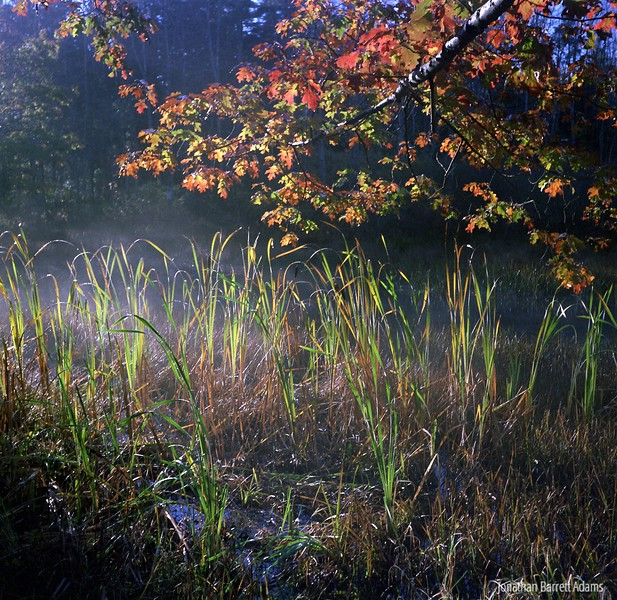 Misty Autumn Pond
