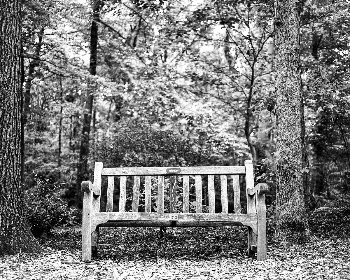 Meadowlark Botanical Gardens, May 2017, RZ67, Ilford HP5+ film, home processed.