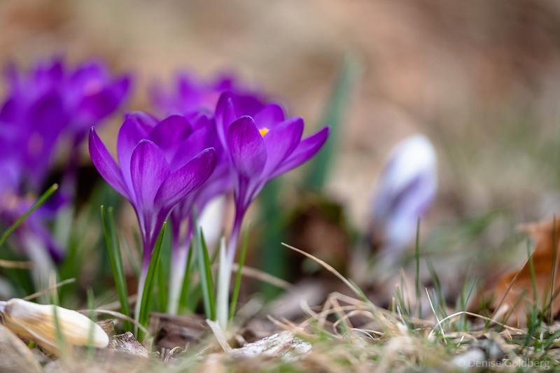 spring! 2021