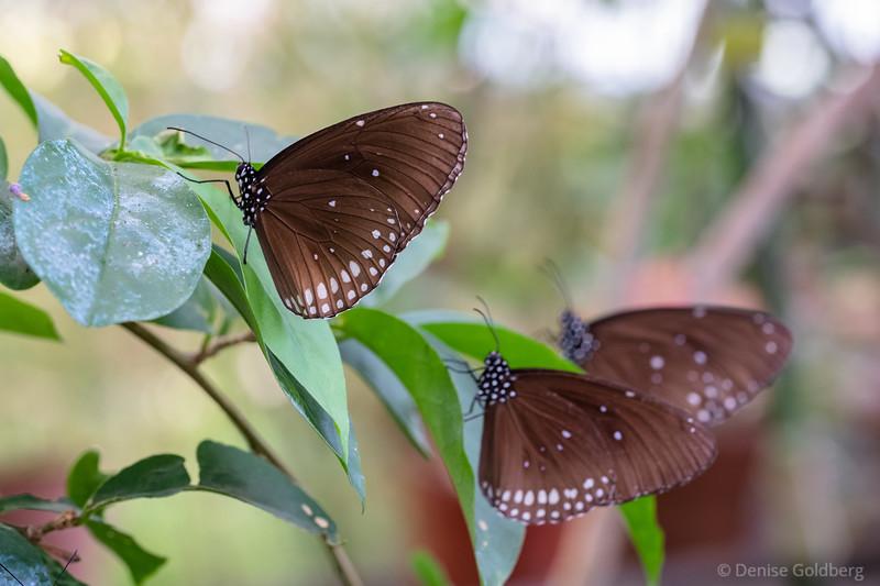 flitter, flutter, butterfly! 2019