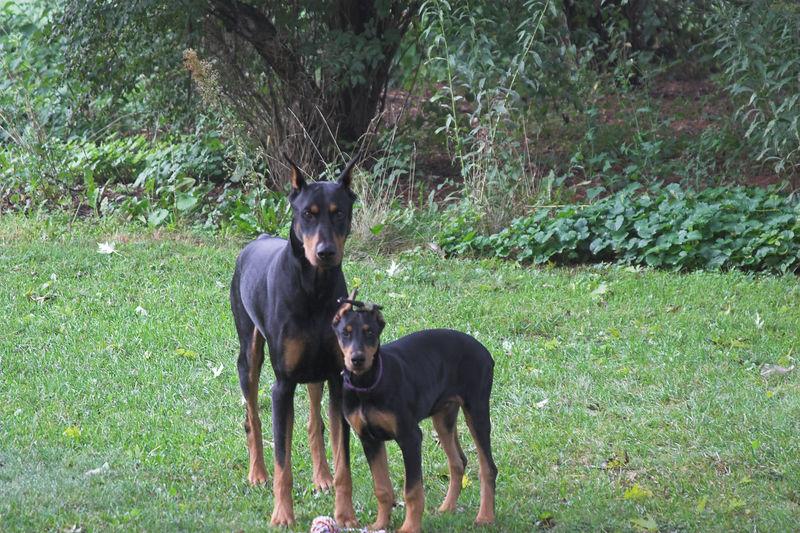 dogs_MG_2487