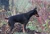 dogsCRW_0770-01