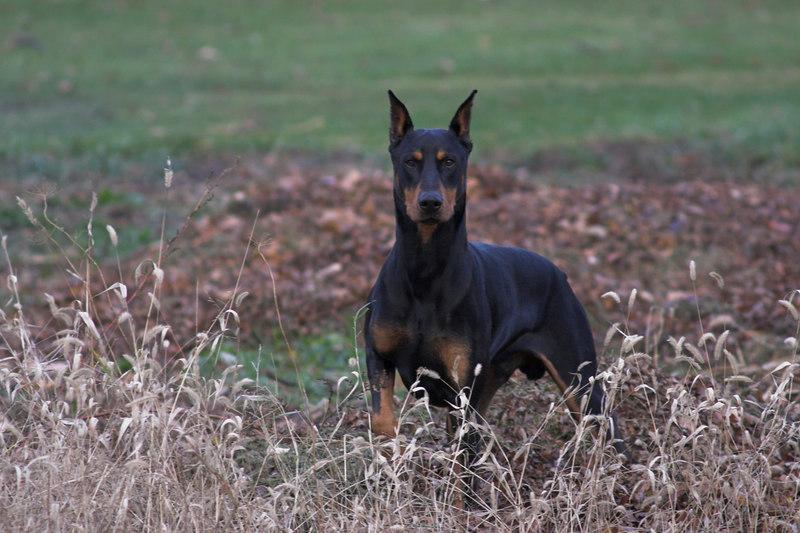 dogsCRW_0779-01