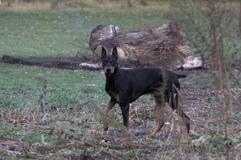 dogsCRW_0772-01