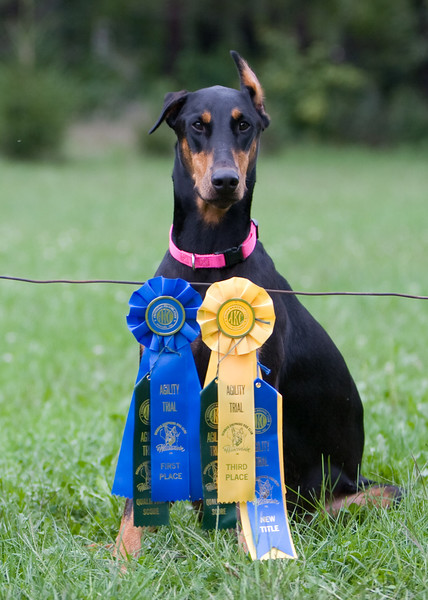 GSD Show 8/18,19:  Third place Novice Standard with NA Title, First place Open Jump With Weaves.