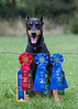 GSD Show 8/18,19: First and second place Novice Std and NA Title, First place Novice Jump With Weaves.