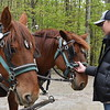 GREG SUKIENNIK -- MANCHESTER JOURNAL<br /> Joseph Orwell, 15, converses with Arch, left, and Fern, a pair of Suffolk Punch draft horses, at Merck Forest and Farmland Center on Saturday, May 19.