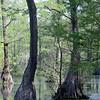 ECFT_Ira_Miller_Pond Trees