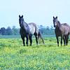 ECFT_Lana_Rebert_Horses