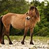 Beaufort_Neva Scheve_Carrot Island Stallion