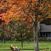 Enjoying Fall - Dave Powers