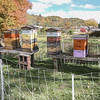 Condos for Bees - Dave Powers