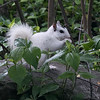 Jennifer German - White Squirrels of Brevard-2
