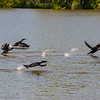 Powers_Cormorant Race