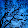 Abstract tree branches