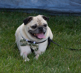 Paws  In The Park Fundraiser