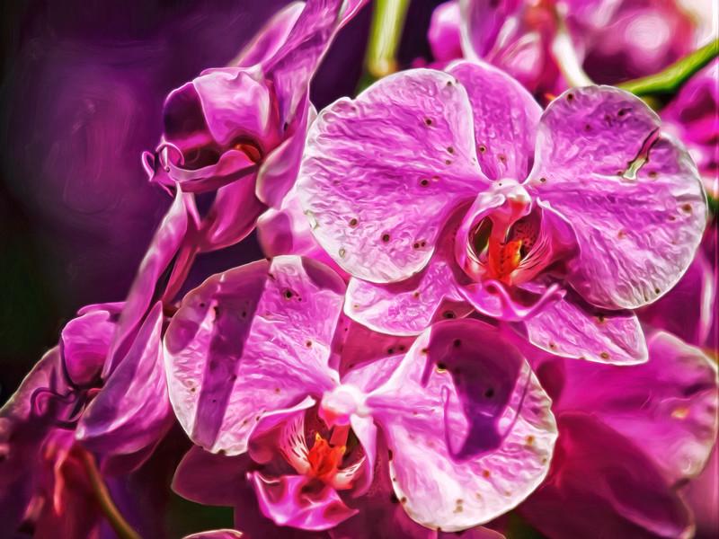 """Magnificent Magenta Orchids"""