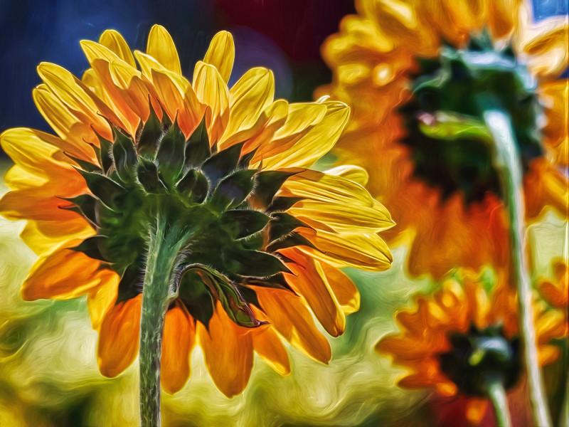 """Sunflower City"""