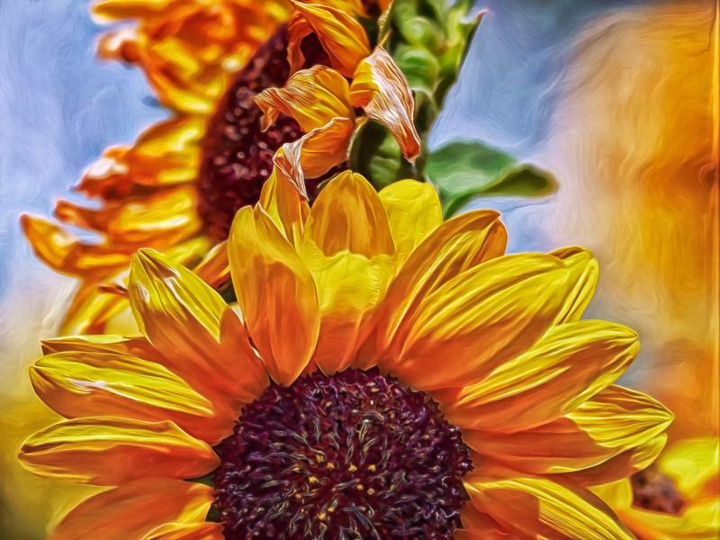 """Sunflower Risen"""