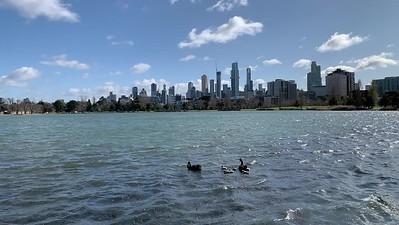2020-08 Albert Park Lake - Swans