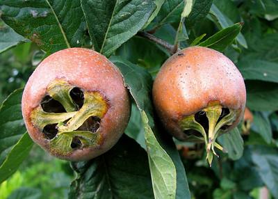 Unidentified Fruit