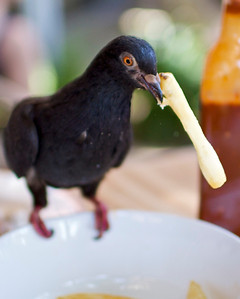 Bird eating French Fries