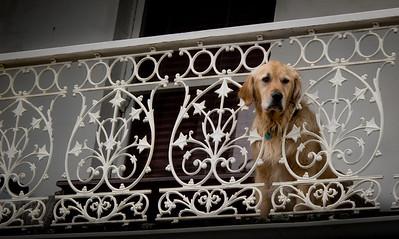 Second Storey Dog