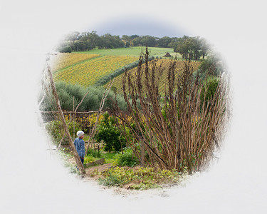 Child in a vineyard. May 2011