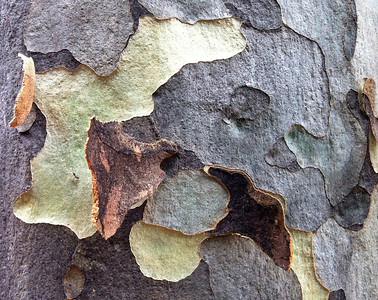 Ant on tree bark at Melbourne University. Jan 2012 (iphone4 photo)