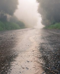 Rain and fog. Dandenong Mountains, July 2012.