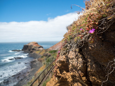 Sunshine and flowers along the Victorian coast