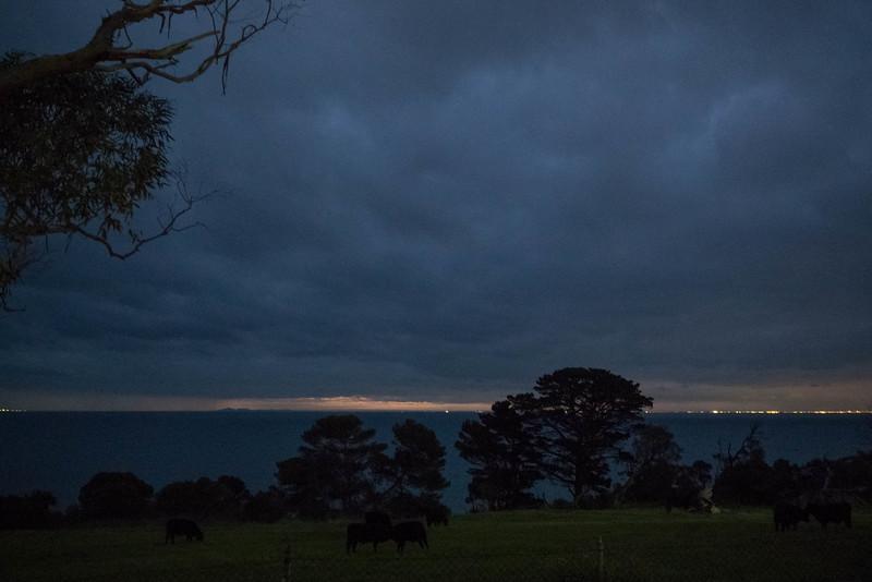 """""""Cows at night"""""""