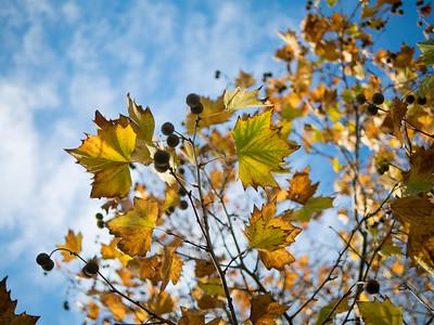 Blue, yellow, winter