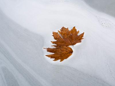 Fall leaves on white foam