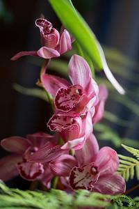 Richard's orchids