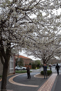 Irresistible springtime flowers (III)