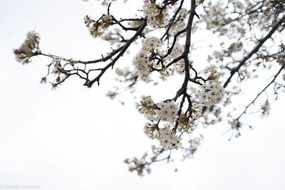 Irresistible springtime flowers (II)