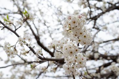 Irresistible springtime flowers.