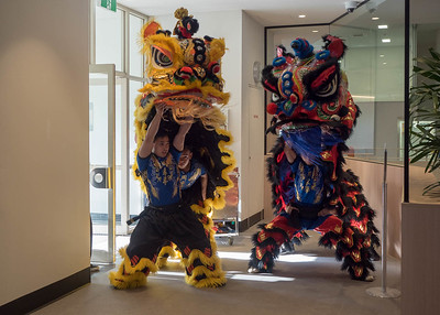 Lion dance on Chinese New Year
