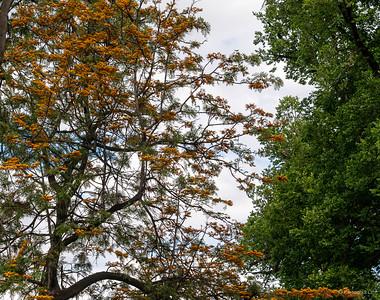 Trees, Carlton.