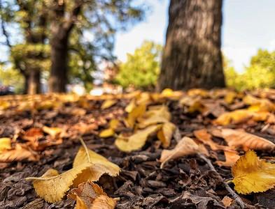 Autumn leaves scatter, little by little, soon forgotten