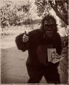 Ape at Unimelb