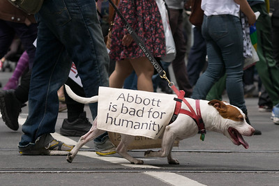 Dog among the protestors